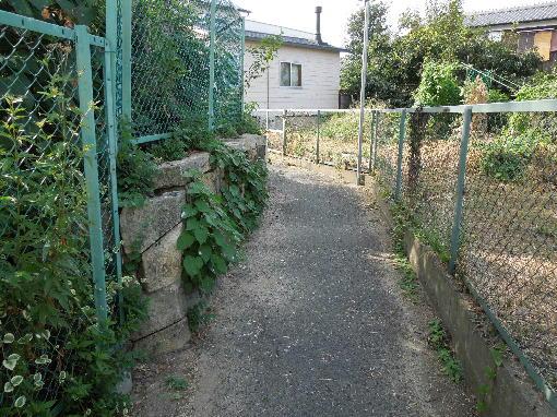 3.楠の下の道