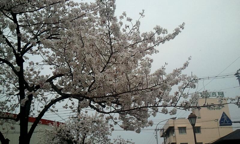 2012_04_10_11_35_15.jpg