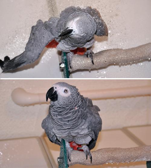 シャワー中のChloe