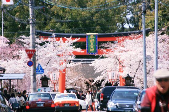 平野神社0227b_R