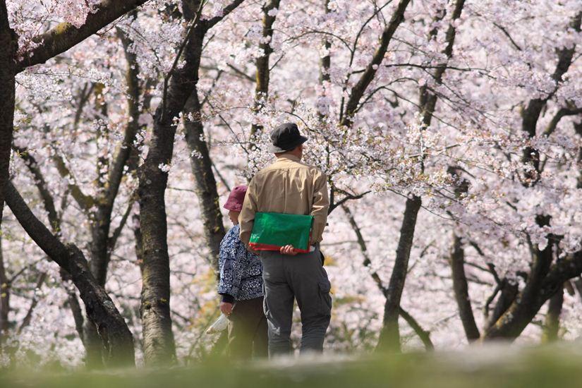 半田山桜0248_R