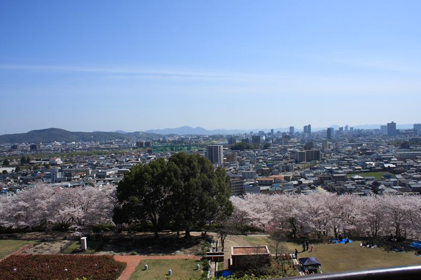 半田山桜0247_R