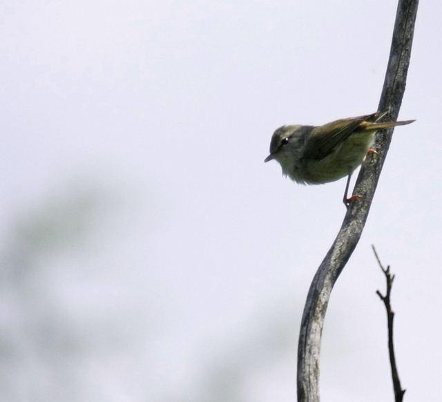 野鳥0355_R