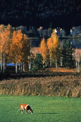 秋のレマン湖地方ジュー渓谷3_convert_20141005214516