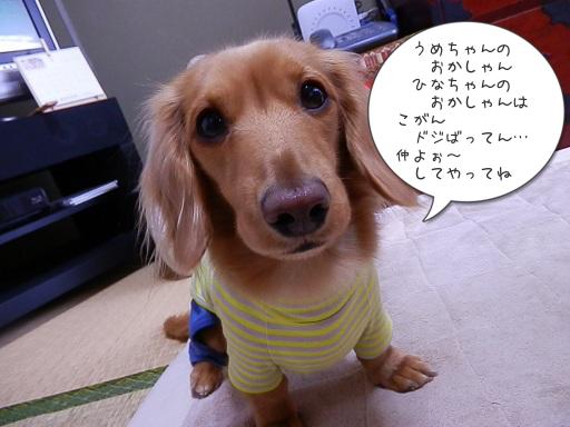 梅ちゃん ♡ 雛ちゃん