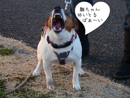 雛ちゃん、モテモテ ♡