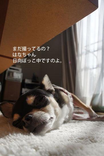 ぽかぽか5