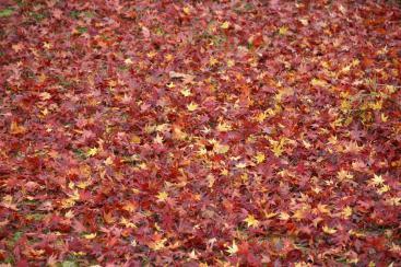 終焉の絨毯