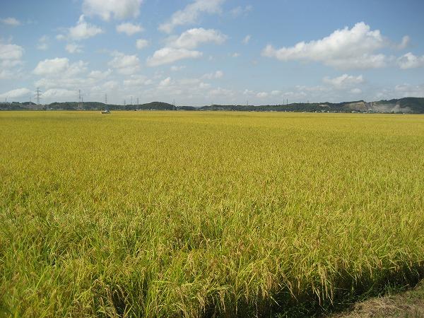 200909三陸 (66)