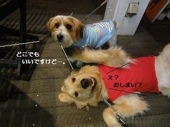 photoby父ちゃん2
