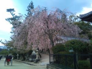 2012 04 広島出張の巻 スマホ 1009