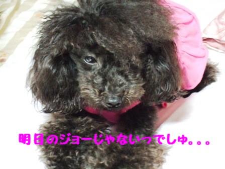 DSCF462520100713.jpg