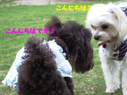 DSCF463220100721.jpg