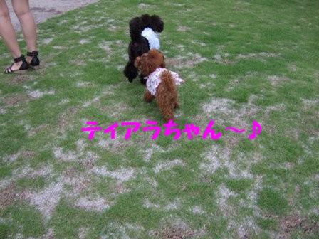 DSCF463620100721.jpg