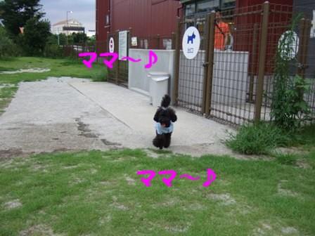 DSCF464120100721.jpg