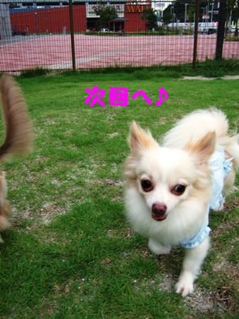 DSCF464720100721.jpg