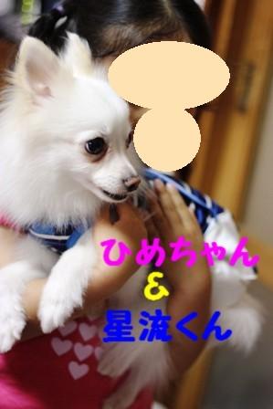 IMG_391020100612.jpg