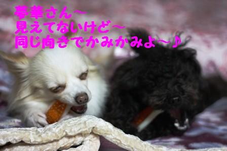 IMG_394420100610.jpg