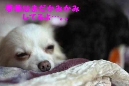 IMG_396120100610.jpg