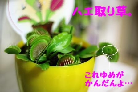 IMG_409020100614.jpg