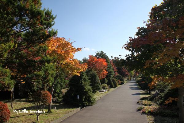 樹芸センター