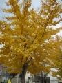 美しい秋1