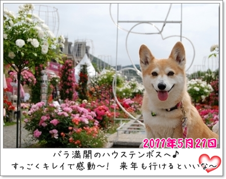 2011_0521(054)-1-crop.jpg