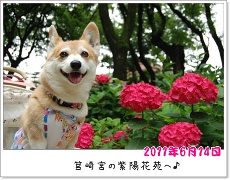 2011_0614(050)-crop.jpg