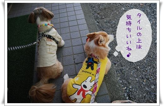 2011_0915(007).jpg
