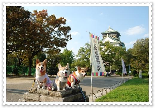2011_1008(030).jpg