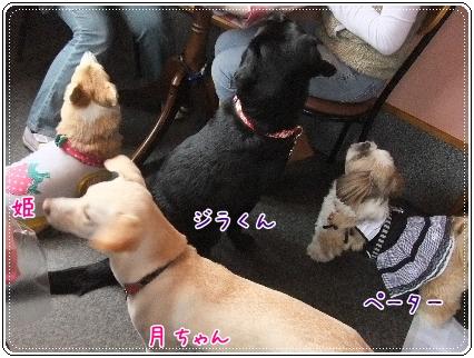 2011_1108(011).jpg