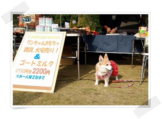 2011_1127(008).jpg