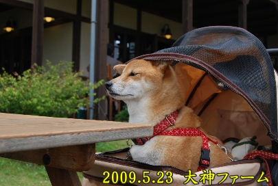 2009.6大神ファーム