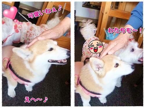 すも&姫1