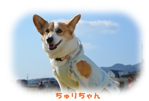 2012_0212(003)-1.jpg