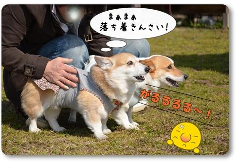 2012_0212(028)-1.jpg