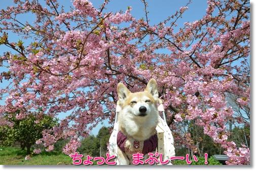 2012_0321(012)-1.jpg