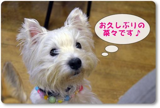 2012_0402(004).jpg