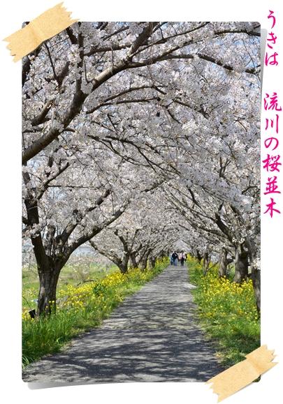2012_0407(002)-1.jpg