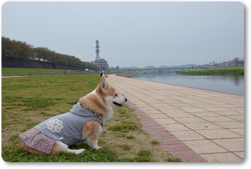 2012_0419(024)-1.jpg