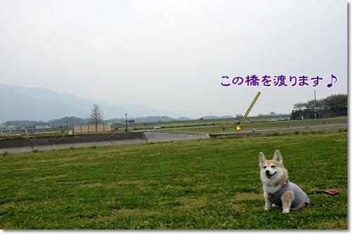 2012_0419(026).jpg