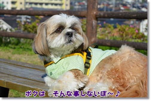 2012_0426(054).jpg