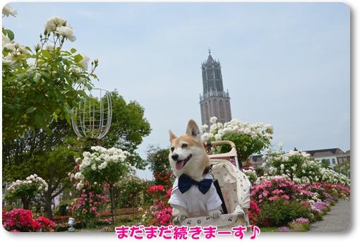 2012_0519(052)-1.jpg
