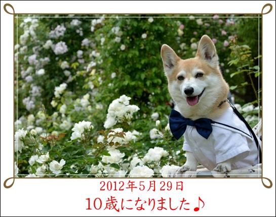 2012_0519(102).jpg