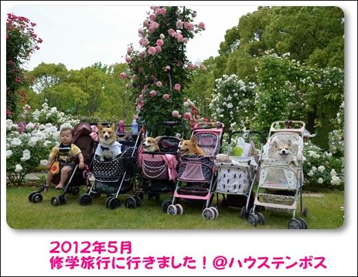 2012_0519(114)_20121229234806.jpg