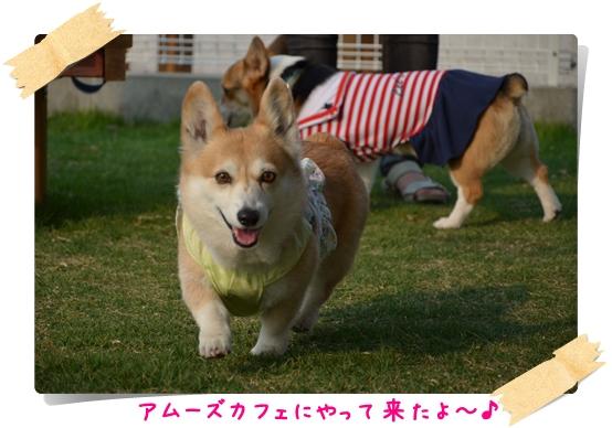 2012_0529(071)-1.jpg
