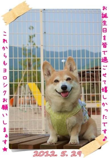 2012_0529(095)-1.jpg