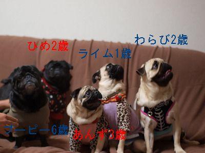 s-2010_02280029.jpg