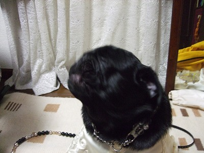 s-2010_03020019.jpg