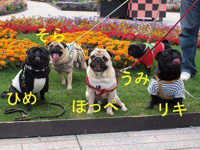 s-2010_04110041.jpg
